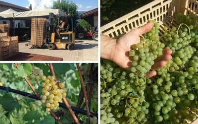 Sole d'Autunno: passito di Chardonnay Bio