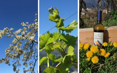 La qualità del vino bio nel rispetto della natura