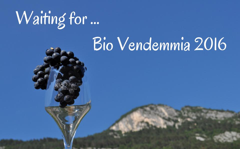 Countdown per la Bio Vendemmia 2016