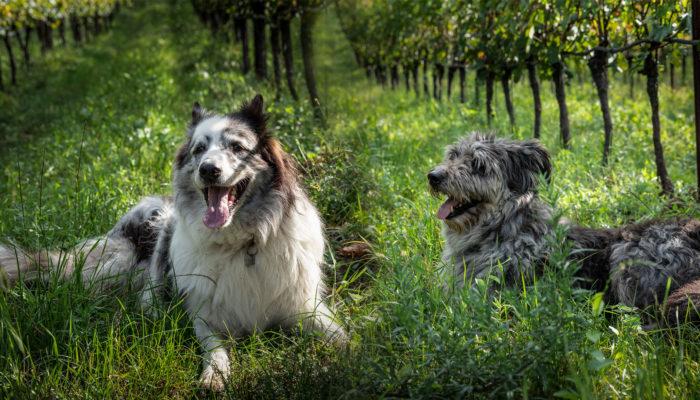 Benny & Tobia